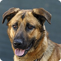 Adopt A Pet :: Brock - Rigaud, QC