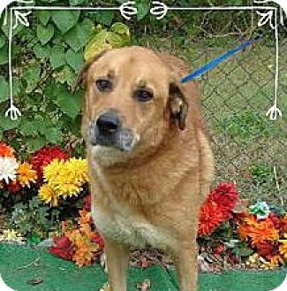 Retriever (Unknown Type) Mix Dog for adoption in Marietta, Georgia - HUGO