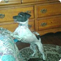 Adopt A Pet :: Oreo - Northumberland, ON