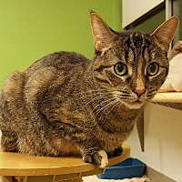 Adopt A Pet :: Glurna - Chicago, IL