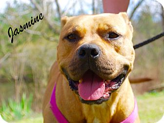 Pit Bull Terrier Mix Dog for adoption in Daleville, Alabama - Jasmine