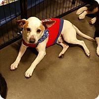 Adopt A Pet :: Bobby - Alexis, NC
