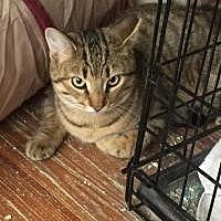 Adopt A Pet :: Cleo - Medford, NJ