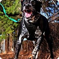 Adopt A Pet :: Mumphord - Fort Smith, AR