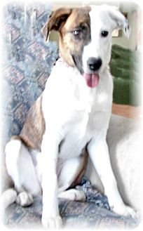 Beagle Mix Dog for adoption in Winfield, Pennsylvania - Susie Q