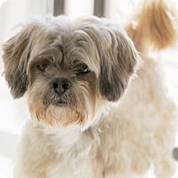 Adopt A Pet :: Luigi - Colorado Springs, CO