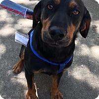 Adopt A Pet :: Expresso - Joliet, IL