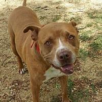 Adopt A Pet :: Brisco (COURTESY 6/9/17) - Lovingston, VA