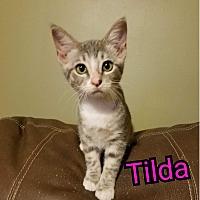 Adopt A Pet :: Tilda - Hastings, FL