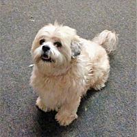 Adopt A Pet :: Beamer - Tavares, FL