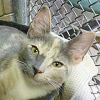 Adopt A Pet :: Reese's - Phoenix, AZ
