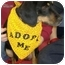 Photo 2 - Hound (Unknown Type)/Dachshund Mix Dog for adoption in Huntingdon, Pennsylvania - Casey