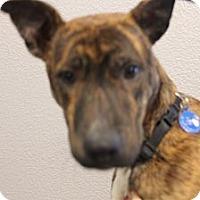 Adopt A Pet :: Parker - Pflugerville, TX