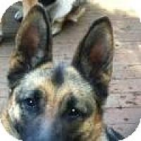 Adopt A Pet :: Heidi-Update - Hamilton, MT