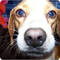 Adopt A Pet :: Twist CUTE AND SWEET! - Antioch, IL