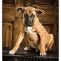 Adopt A Pet :: Vinnie - Owensboro, KY