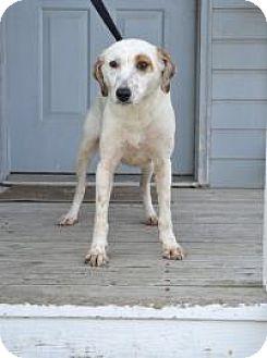 Hound (Unknown Type) Mix Dog for adoption in Georgetown, South Carolina - Leeza