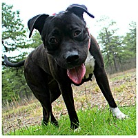 Adopt A Pet :: Bella - Forked River, NJ