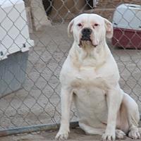 Adopt A Pet :: Chloe - Lancaster, CA