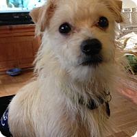 Adopt A Pet :: Cooper Too - San Francisco, CA