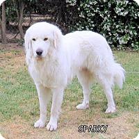 Adopt A Pet :: Sparky (Ritzy) - Lindsay, CA
