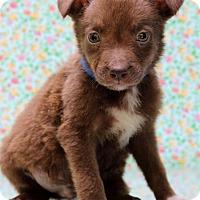Adopt A Pet :: Rowan - Waldorf, MD