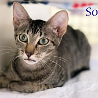 Adopt A Pet :: Sophie 17-0139 - Richardson, TX