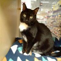 Adopt A Pet :: 35041807 - Buffalo, NY