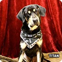 Adopt A Pet :: Titan meet me 8/4 - East Hartford, CT