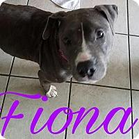 Adopt A Pet :: Fiona - Pinellas Park, FL