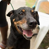 Adopt A Pet :: Bullet - Decatur, GA