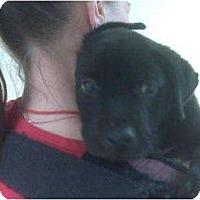 Adopt A Pet :: Dusty - Altmonte Springs, FL