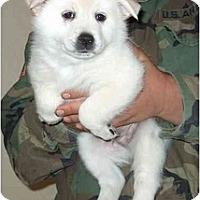 Adopt A Pet :: Sir Jason ADOPTED - Phoenix, AZ