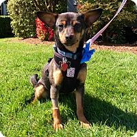 Adopt A Pet :: Sparkles - Adopted - Gig Harbor, WA