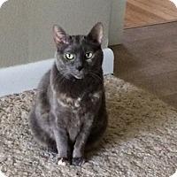 Adopt A Pet :: Tasha *front declawed* - Verona, WI