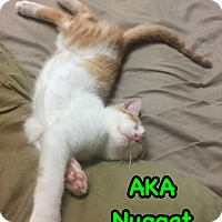 Adopt A Pet :: Nugget - Brentwood, NY