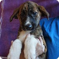 Adopt A Pet :: Safra - Oviedo, FL