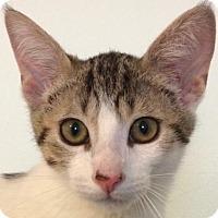 Adopt A Pet :: Boone - Auburn, CA