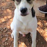 Adopt A Pet :: Squirrel - Wichita Falls, TX