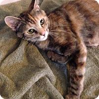 Adopt A Pet :: Tulip Springs - Marlborough, MA