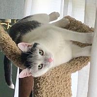 Adopt A Pet :: Floop - Carlisle, PA