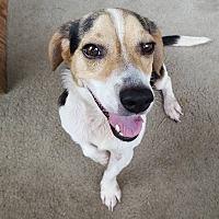 Adopt A Pet :: Beau - Savannah, GA