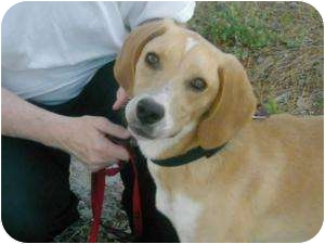 Coonhound Mix Dog for adoption in Parkton, North Carolina - Hansel