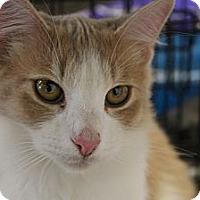Adopt A Pet :: Fluff - Santa Monica, CA