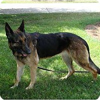 Adopt A Pet :: Brooke - Green Cove Springs, FL