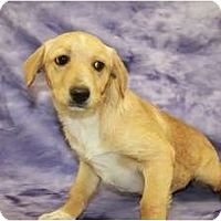 Adopt A Pet :: Butterfly - Broomfield, CO
