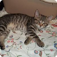 Adopt A Pet :: Skittles - Acme, PA
