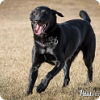Adopt A Pet :: jesse - High River, AB