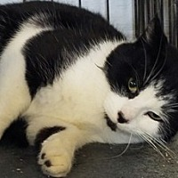 Adopt A Pet :: Theo - Sistersville, WV
