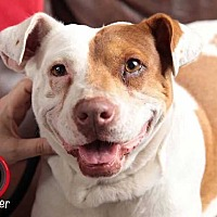 Adopt A Pet :: Myra - Sidney, NE